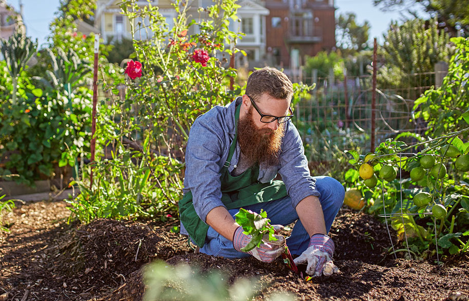 Vedic Agriculture and Gardening